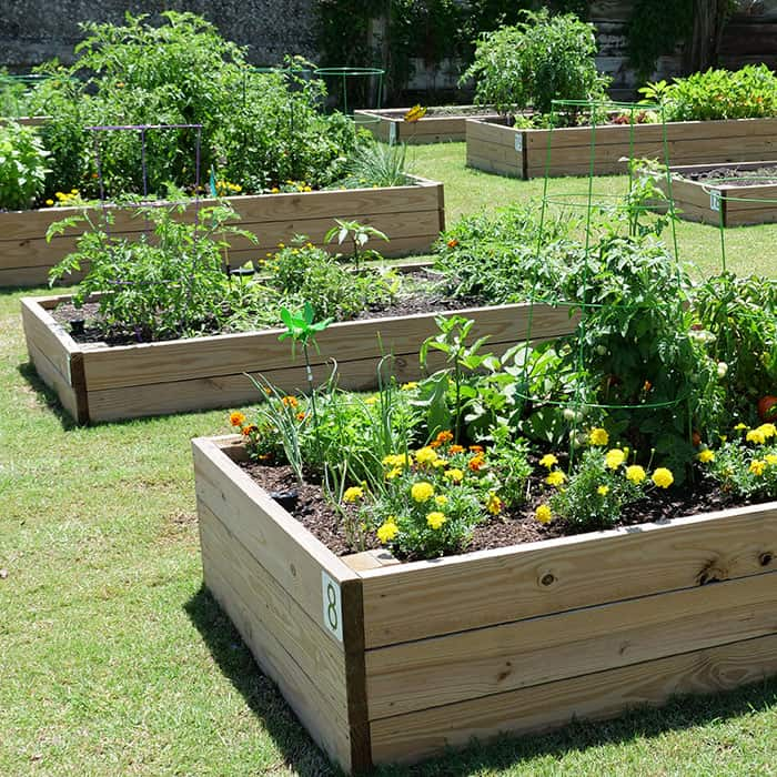 Garden with herbs, flowers and vegetables at South Line Apartments
